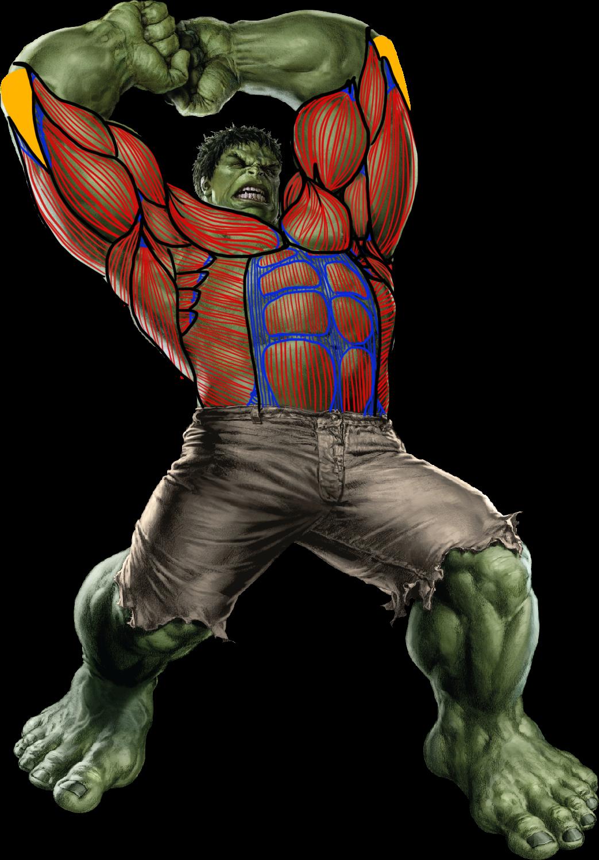 Anatomía de Hulk | Lourdes Del Castillo