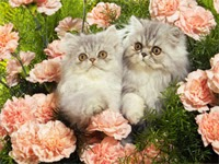 Cats in carnations