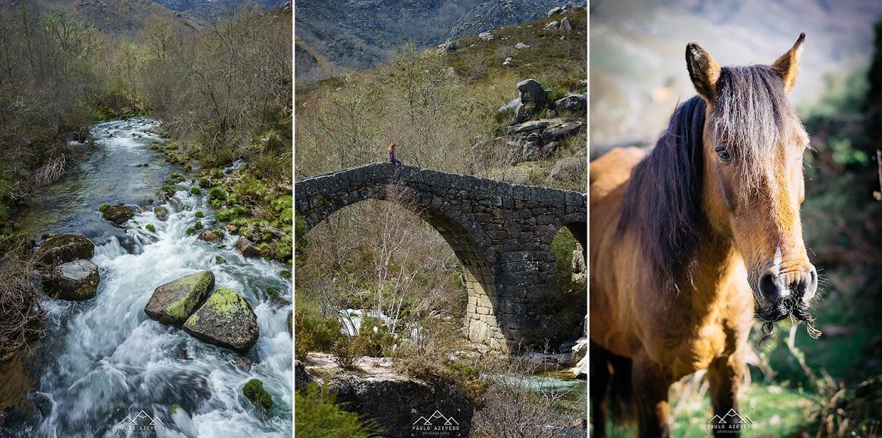 Ponte romana e cavalo selvagem