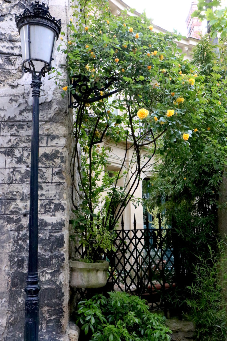 Yellow blooming flowers on private Avenue Frochot in Paris