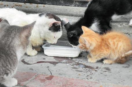 Sokak hayvanları için neler yapılır
