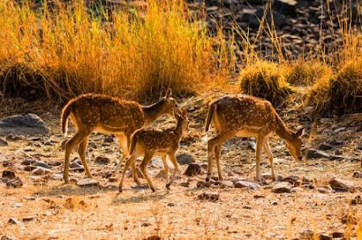12 Rarest Animals for Which Nameri National Park is Famous