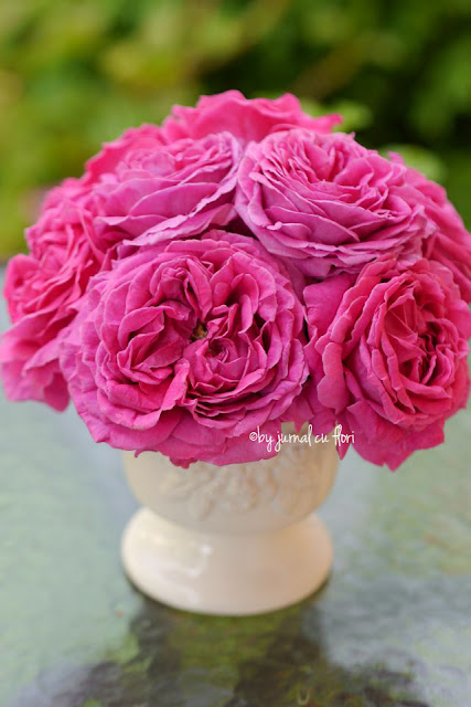 trandafiri roz ciclamen vintage