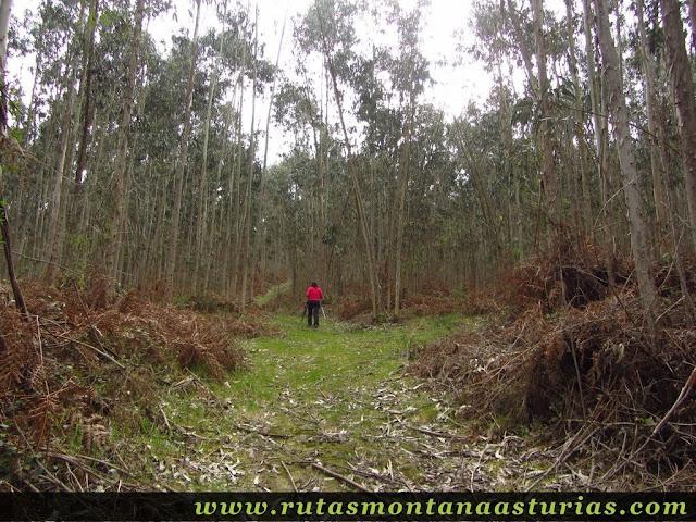 Bosque en el pico Prieto