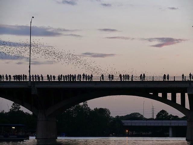 People viewing bats coming out from the Congress St. Bridge in Austin, TX.