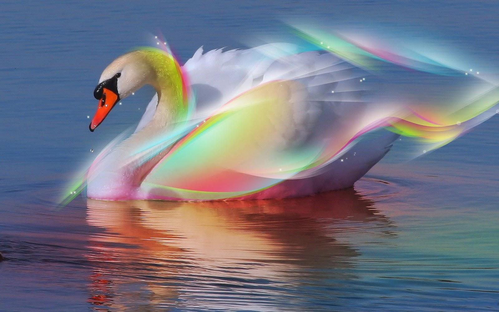 Swan wallpapers b n v x y d ng c ng ngh x y d ng - Swan wallpapers for desktop ...