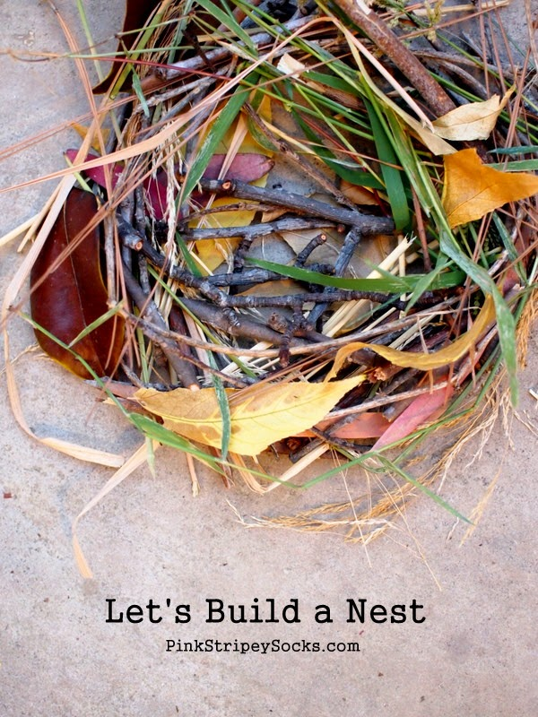 build a bird's nest using items gathered from nature walk