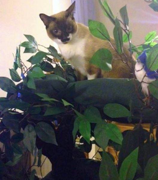 Amazing Cat Trees
