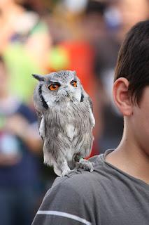 Cara Merawat Burung Hantu Yang Benar Untuk Pemula