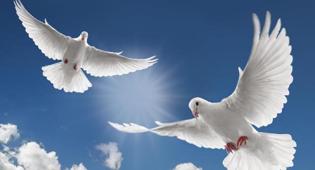 Barışın Simgesi
