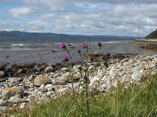 Vadvirágok a parton