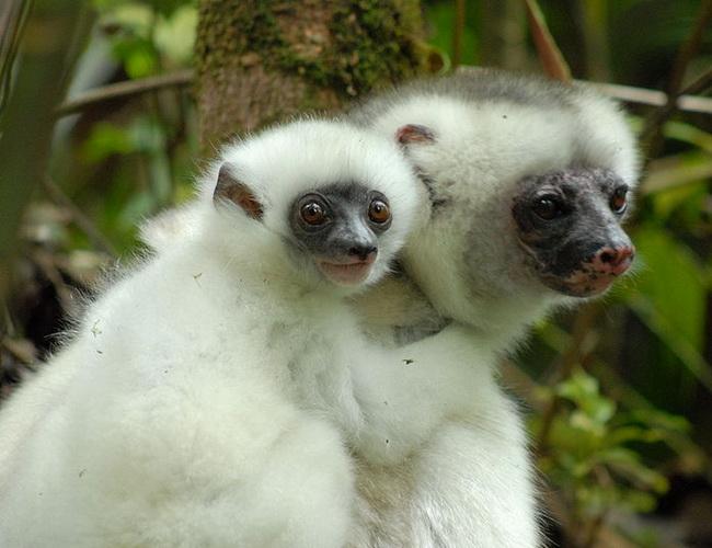 Xvlor Marojejy National Park