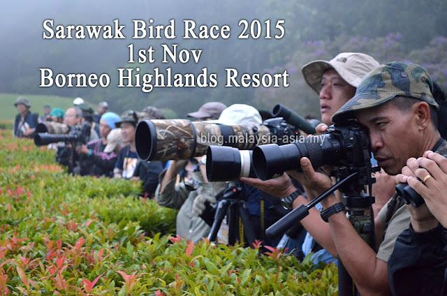 Sarawak Bird Race 2015