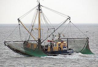 صيد السمك التجاري