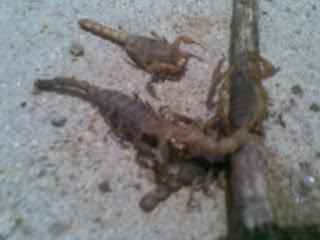 Live Scorpions