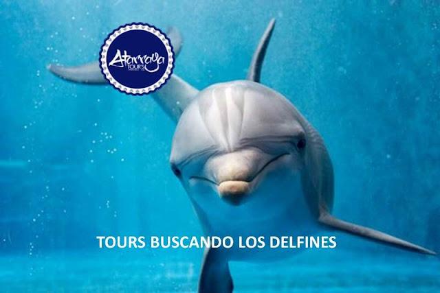 imagen Tours buscando los delfines sábado 24 de noviembre 2018