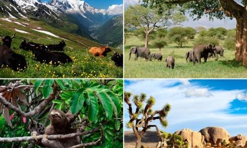 Inminente colapso global de biodiversidad si no hay acción