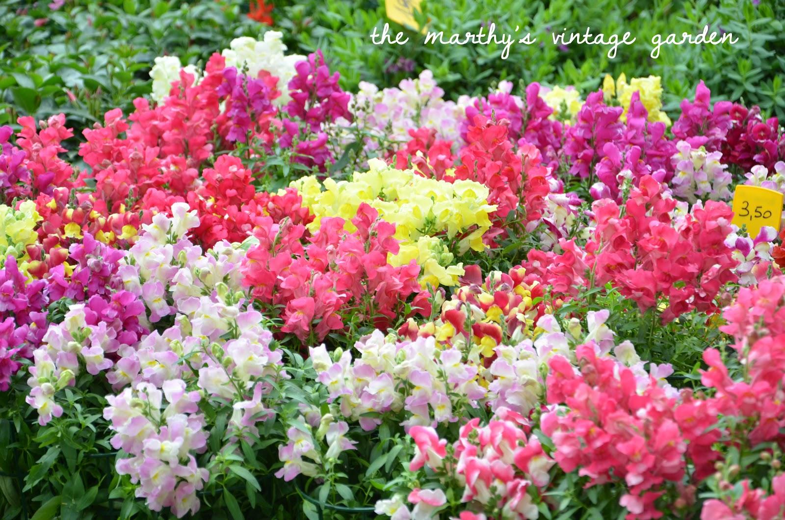 The marthy 39 s vintage garden il giardino dell 39 orticoltura for Giardino fiori