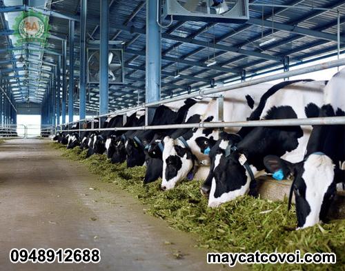 Máy băm cỏ voi cho bò 3A 9Z-9A là sự lựa chọn hàng đầu của các trang trại chăn nuôi bò