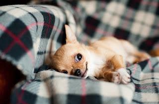 Cara merawat anak anjing yang baru lahir
