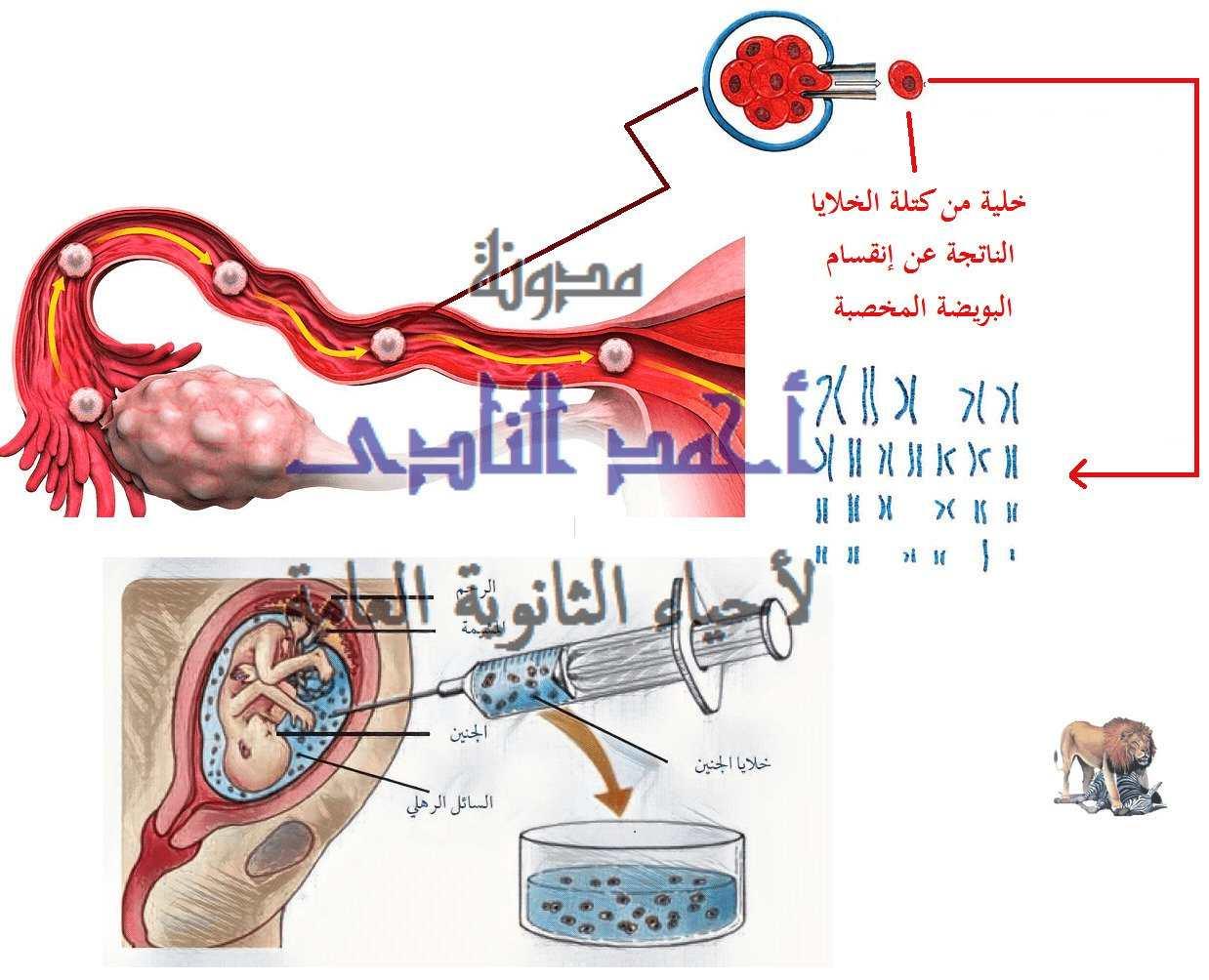 الجينوم البشرى - العلاج الجينى- مدونة أحمد النادى لأحياء الثانوية العامة