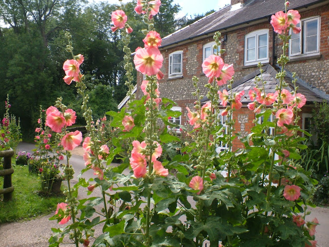 picture of cottage with hollyhocks-Growing hollyhocks from seed