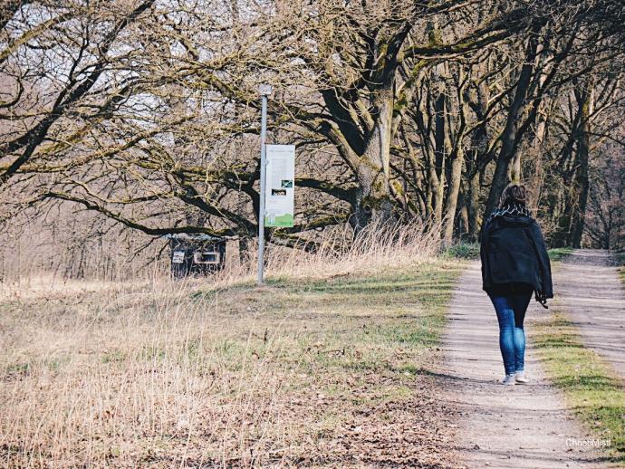 Wandern in Brandenburg auf dem Zweiseitenweg um das Rambower Moor