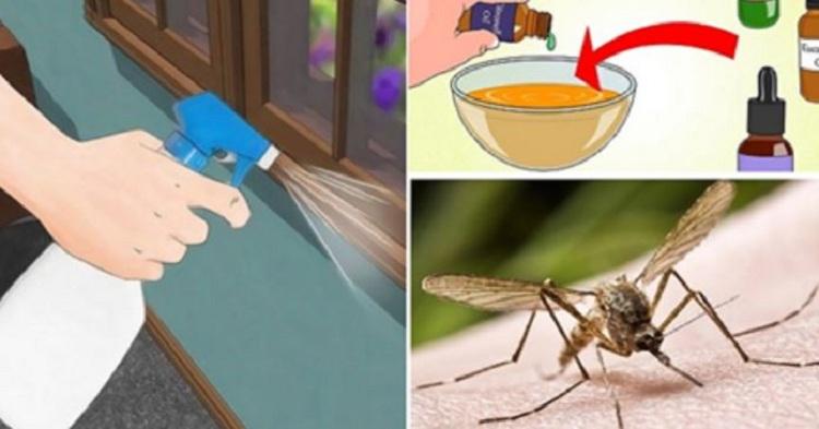 quelques astuces anti moustiques faciles r aliser et. Black Bedroom Furniture Sets. Home Design Ideas