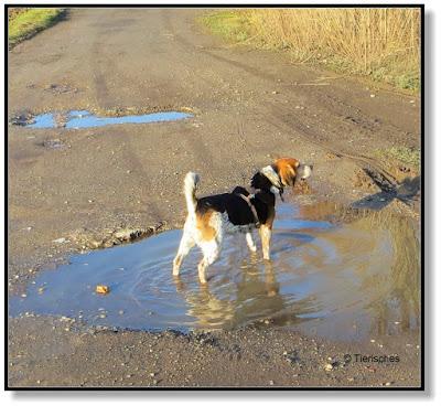 So gefallen einem Beagle die Spazierwege