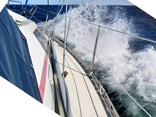 Jacht na falach