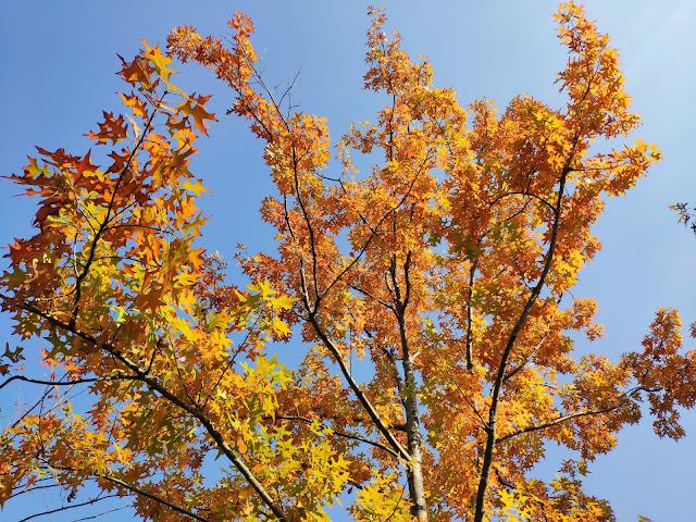 金桥公园秋色插图