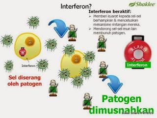 interferon; nutriferon; antobiotik semulajadi; Shaklee Tawau; Shaklee Kuching; Shaklee KK