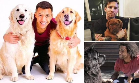 Football stars such as Messi and Marcelo Vieira show off their dogs
