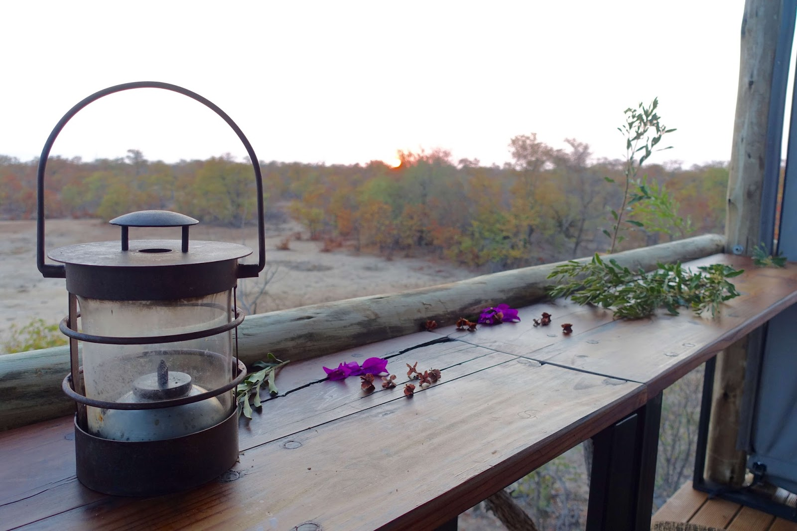 motswari private game reserve sleep out experience