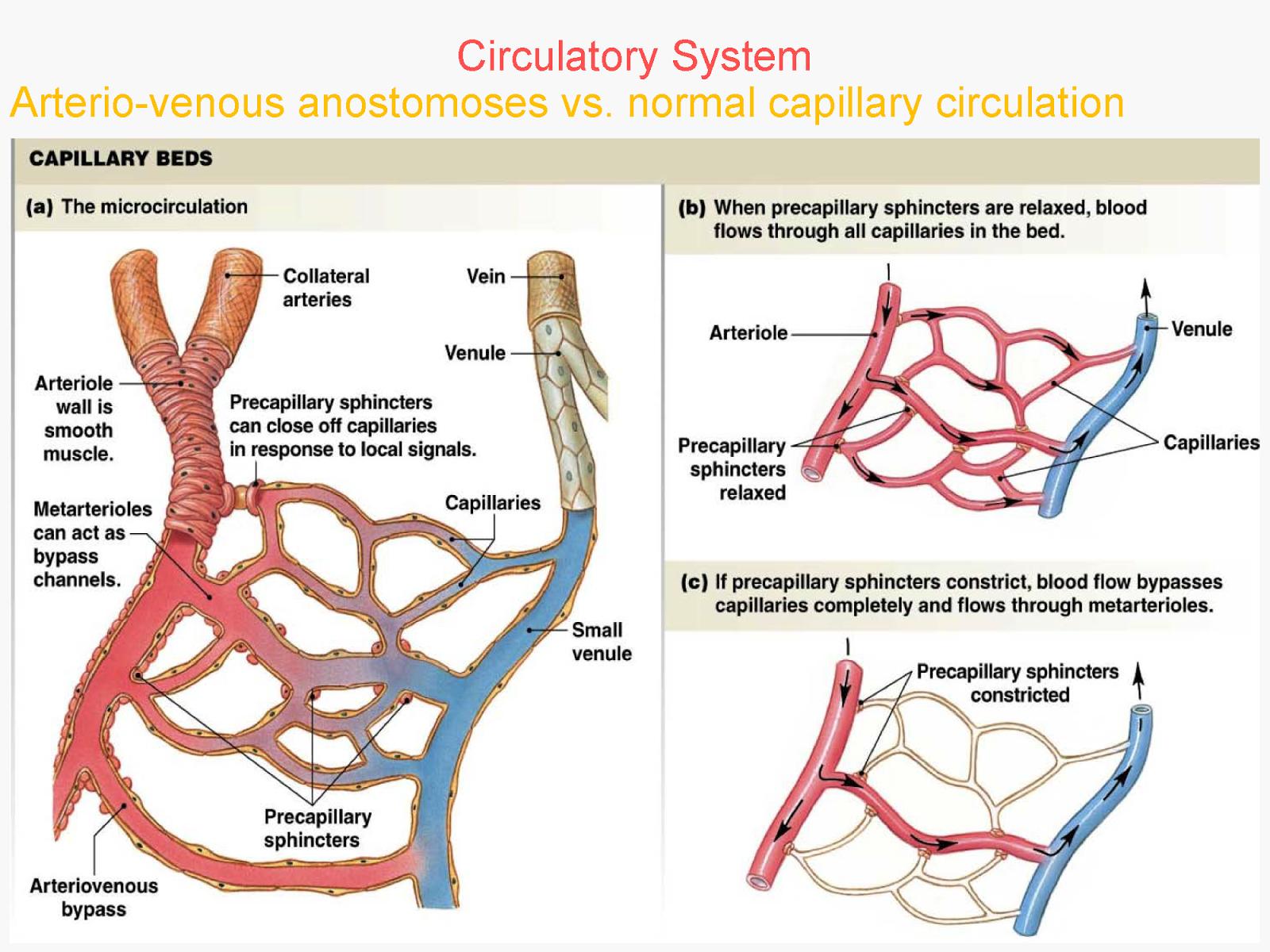 medium resolution of Heart Diagram For 5th Grade - Wiring Diagram •