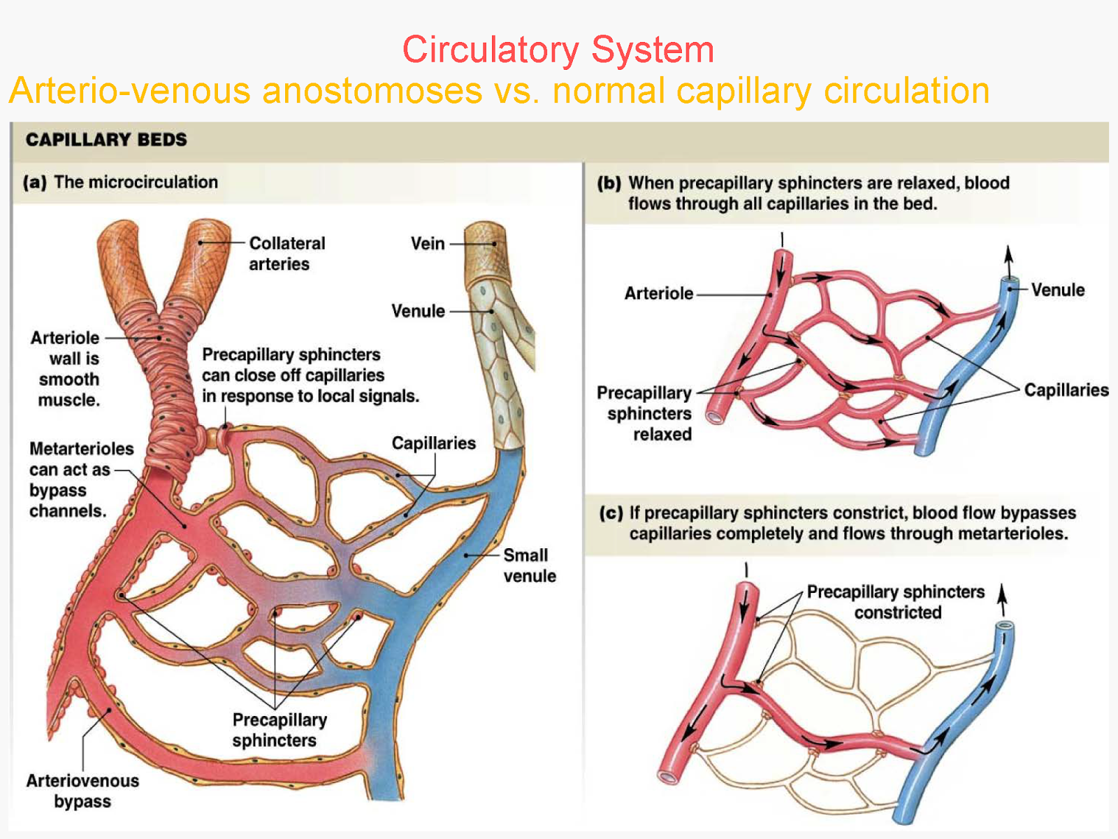 circulatory systems The circulatory system channel explains how your heart, blood and other cardiovascular components work find out how your circulatory system keeps things moving inside you.