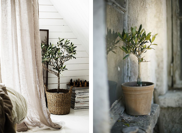 la fabrique d co une plante un style de d co. Black Bedroom Furniture Sets. Home Design Ideas
