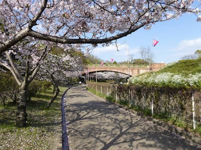 寝屋川公園の桜 花の道 月観橋