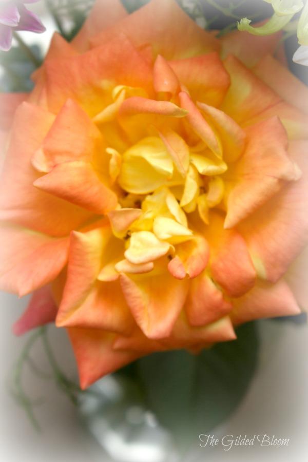 Autumn Rose www.gildedbloom.com #roses
