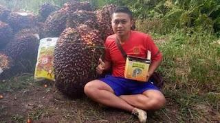 http://www.distributorpupuknasa.com/2018/01/distributor-pupuk-nasa-di-berau.html