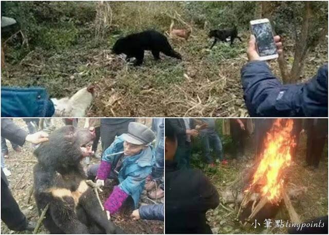 慘死的迷途小黑熊