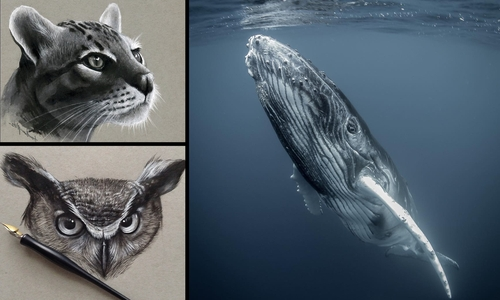 00-Jonathan-Martinez-Realistic-Pencil-Animal-Drawings-www-designstack-co