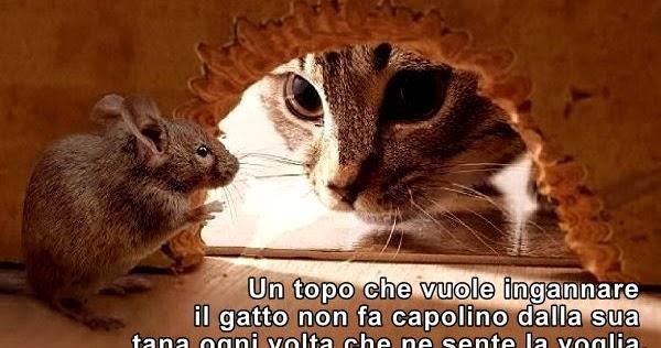 Aforismario gatto e topo aforismi frasi e proverbi - Come catturare un topo in casa ...