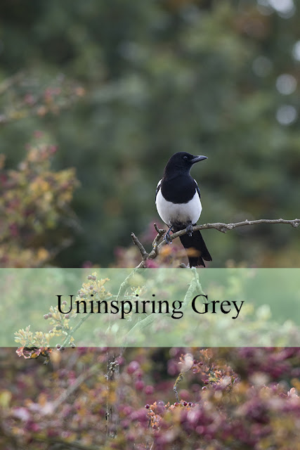 Uninspiring Grey - A walk around my local nature reserve