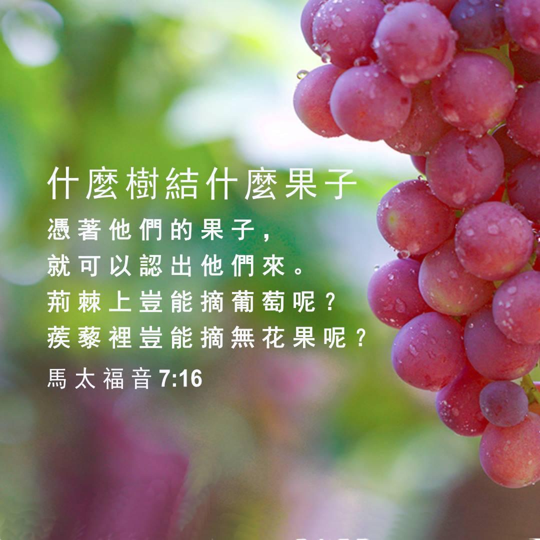 "Image result for "" 凭着他们的果子就可以认出他们来。""(太7: 20)"
