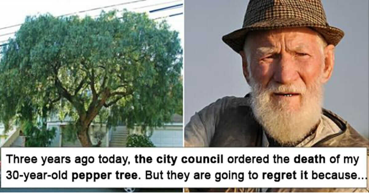 Old Man's Powerful Message To The Town Of California That Cut Down His Favourite Tree