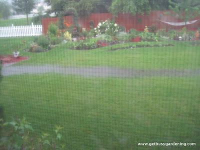Swampy backyard