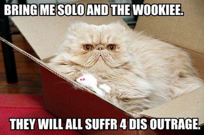 Cool Animals Pictures: Hilarious LOLcats