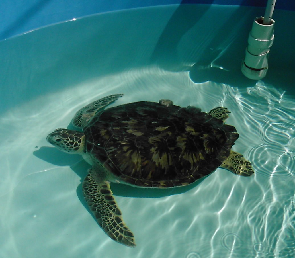 A Visit To Georgia Sea Turtle Center Is Enlightening!