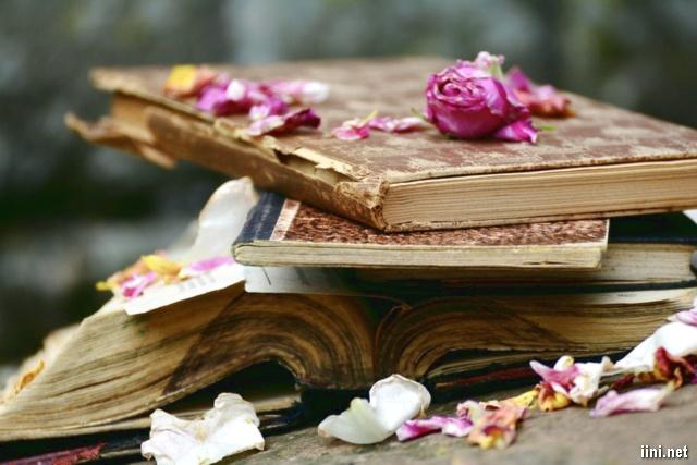 ảnh những cánh hoa tàn bên cuốn sách cũ